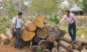 Kỳ 1 - Mất hàng trăm nghìn ha rừng, ai chịu trách nhiệm: Mất rừng, mất hàng nghìn tỷ đồng