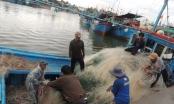 Ngư dân Ninh Thuận phấn khởi với mẻ cá thuận lợi đầu năm