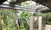 Hà Tĩnh: Lốc xoáy trên diện rộng, nhà cửa, hoa màu bị tàn phá nặng nề