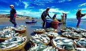 EU trả về 17 lô nông, thuỷ sản của Việt Nam