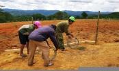 Đà Lạt xử lý nhiều trường hợp biến đất rừng phòng hộ thành trang trại
