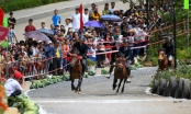 Những khoảnh khắc tranh tài quyết liệt tại giải đua ngựa Fansipan lần thứ nhất