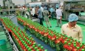 Câu chuyện đằng sau mỗi chai nước giải khát 10.000 đồng của Tân Hiệp Phát