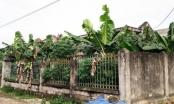 Ninh Bình:  Công trình nước sạch vài tỷ biến thành nơi trồng chuối
