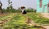 Ninh Bình: Mỗi năm kiếm hàng chục triệu đồng từ cây bèo tây