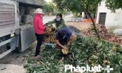 Cả hệ thống cùng vào cuộc, nông sản được giá người dân Bắc Giang mừng vui