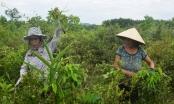 Nét độc đáo Tết Đoan Ngọ của người dân xứ Huế