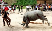 Thừa Thiên Huế: Yêu cầu xác minh vụ thu tiền tổ chức lễ hội đâm trâu