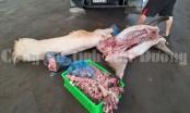 Xử phạt và tiêu hủy gần 3 tạ thịt lợn thối