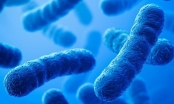 10 triệu người có thể tử vong mỗi năm do vi khuẩn kháng thuốc