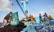 Mỗi năm Việt Nam khai thác hơn 3 triệu tấn hải sản