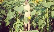 Nam thanh niên chụp ảnh khỏa thân phản cảm ở cánh đồng hoa hướng dương