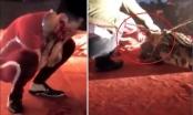 Hà Nam: Diễn viên xiếc bị cá sấu cắn vào mặt khi đang biểu diễn