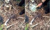 Bắc Ninh: Kinh hoàng phát hiện thi thể trơ xương trong bụi rậm