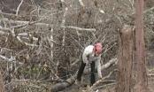 Điện Biên: Bắt giữ 56 đối tượng có hành vi tàn phá rừng