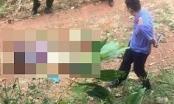 Thái Nguyên: Phát hiện thi thể phụ nữ nhiều vết đâm trong vườn cây