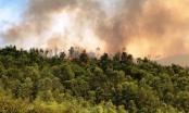 Thanh Hóa: Nắng nóng thiêu rụi gần 10ha rừng thông