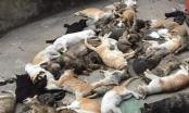 Nam Định: Người dân hoang mang trước việc hàng loạt con mèo chết bất thường