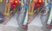 Hoảng hồn với Clip bác sĩ bị chó cắn rách mắt trên đường đi làm về ở Phú Thọ