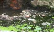 TP HCM: Kênh Gia Định bị bức tử từ các lò giết mổ chó