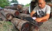 Cục trưởng Kiểm lâm lên tiếng sau vụ bắt trùm gỗ lậu Phượng râu