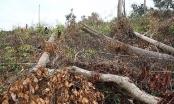 Kiểm điểm, xử lý nghiêm tổ chức, cá nhân để xảy ra phá rừng