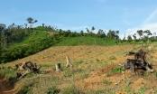 Đắk Lắk: Điểm nóng về phá rừng ở huyện Ea Kar hé lộ nhiều dấu hiệu khuất tất
