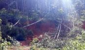 Rừng Lâm Hà tiếp tục bị chặt phá
