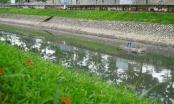 Lâu lắm rồi mới thấy sông Tô Lịch sạch sẽ như vậy!