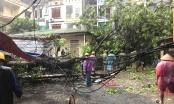 Nhiều cây lớn, cột điện đổ tại Hà Nội do ảnh hưởng bão số 3