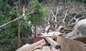 Dấu hỏi lớn sau vụ phá rừng đặc dụng quy mô lớn ở Đắk Lắk