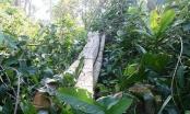 Bí thư Tỉnh uỷ Đồng Nai chỉ đạo làm rõ việc phá rừng ở Khu Bảo tồn thiên nhiên văn hóa