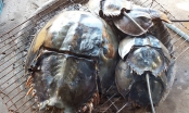 Bình Dương: 1 người chết, 6 người nhập viện sau khi ăn con vật giống Sam biển