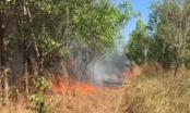 Bình Phước tăng cường các biện pháp về phòng, chữa cháy rừng