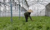 Đồng Nai ứng dụng công nghệ cao vào sản xuất nông nghiệp
