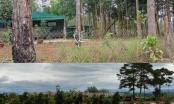 Hàng trăm héc ta rừng ở huyện Bảo Lâm đang dần biến thành của cá nhân