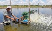 Dấu ấn vốn chính sách trong giảm nghèo bền vững ở Sóc Trăng