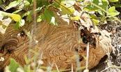 Bị đàn ong vò vẽ đốt hàng chục nốt, bé 2 tuổi tử vong thương tâm