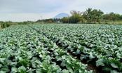 Tây Ninh và TP HCM Xây dựng chuỗi tiêu thụ nông sản, thực phẩm an toàn