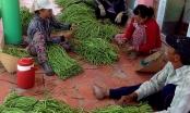 Tây Ninh đưa hộ sản xuất nông sản lên sàn thương mại điện tử