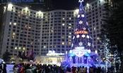 Hà Nội: Những cây thông Noel khổng lồ lung linh sắc màu