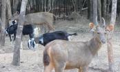 Thú chết ở Vinpearl Safari: Những con số bất thường