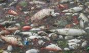Nam Định: Cá chết hàng loạt tại hồ Truyền Thống