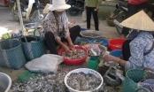 Nghệ An: Chim hoang dã bày bán tràn lan khắp chợ quê