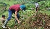 Cao Bằng: Rộn ràng tảo mộ dịp tết Thanh Minh