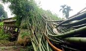 Lào Cai: Giông lốc trên diện rộng khiến ít nhất 71 nhà dân bị tốc mái và 2 người bị thương