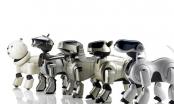 Robot thú cưng sắp sửa tràn ngập thị trường