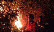 Thanh Hoá: Cháy rừng thông, gần 10ha bị thiêu rụi