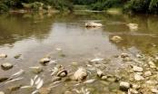 Thanh Hóa: Chỉ nửa năm, cá sông Âm chết bất thường 3 lần