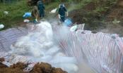 Thanh Hóa: Gian nan tiêu hủy 4.000 con lợn chết nổi trong nước lũ
